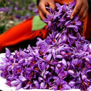 zafran-flower-image