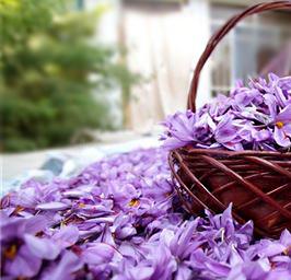 Saffron-flower-homepage-Image
